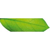 Fruit acids and green tea