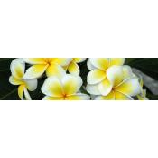 Monoi from Tahiti